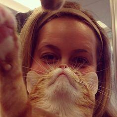 Adorable Adoptable Shara, 2 year old orange tiger, sweet & friendly lap cat #catbeard #catbearding