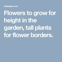Flowers to grow for height in the garden, tall plants for flower borders.