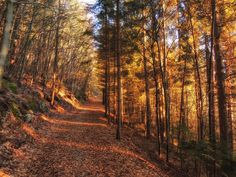 Waldstimmung in Bad Eisenkappel Country Roads, Sunlight, Sunset, Forests