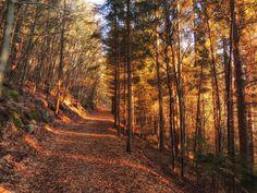 Waldstimmung in Bad Eisenkappel