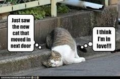 Funny Animal Pictures, cat memes, Just like cat, funniest animals, cat fun, cat funny, humor, funny, funniest, cats memes, cats funny