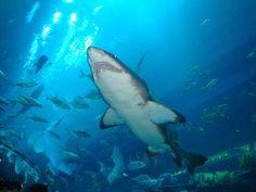 Visit Dubai Aquarium - Top 8 Best Aquariums. The 10-million litre Dubai Aquarium tank, located on the Ground Level of The Dubai Mall, is the largest suspended aquarium in the world | by eTips Travel Apps