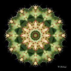Mandala ''Clematis'' von KreativesbyPetra     Mandala auf Leinwand gespannt 20cm x 20cm, mit schwarzen Seitenrand 2cm breit    #kreativesbypetra #Mandala #mandalaart #Natur #nature #fotografie #photography #naturfotografie #naturephotography #makro #macro #makrofotografie #macrophotography #Spiegelung #Spiegelungen #abstrakt #Abstract #Reflexion #adobephotoshop #photoshop #canon #farben #colours #Leinwand #kaktus #cactus #grün #green #wien #botanischergarten #belvedere Mandala Art, Adobe Photoshop, Clematis, Petra, Canon, Mandalas, Macro Photography, Nature Photography, Cactus