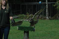 Picture from when I was in Kent. (Owl)
