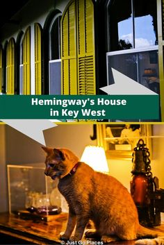 visiting Hemingway's House in Key West Florida which has lots of cats.  My kids were in love with the cats so it was a very successful visit.