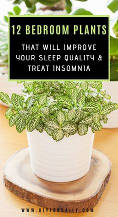 In this article 12 best plants For Your Bedroom are going to discuss which will improve sleep quality and treat insomnia. So click and see the list of 12 plants. plants Best Plants For Your Bedroom That Will Improve Sleep Quality And Treat Insomnia