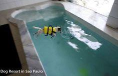Dog Bone shaped pool