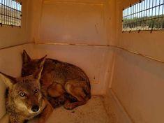 Reintegra PROFEPA siete ejemplares de vida silvestre a su hábitat natural en Ensenada, B.C.