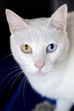 Domestic Short Hair named Spirit is available for adoption at Best Friends Sanctuary in Kanab, Utah | Best Friends Animal Society
