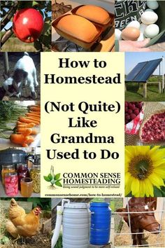 You don't have to move off grid to learn how to homestead. Just take a lesson from grandma and work to provide for your family with the best of old and new.