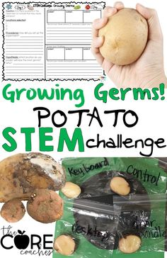 Use potato slices to track germ collection on classroom surfaces. A fun and engaging STEM activity for students!