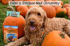 Happy Tasty Tuesday Everyone! Today I'm excited to share with you all two tasty treats from @ZukesPets . The first treat is the Pumpkin Patch Mini Naturals and the second treat it the Z-Bones Minty Fresh. Both of these treats are here just in time for all the fun fall festivities. Click on the picture and enter for your chance to win these tasty treats.