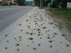 Spider Swarm. Lookout. Cool Bugs, Spider, Sidewalk, Spiders, Side Walkway, Walkway, Walkways, Pavement