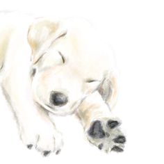 Golden Retriever Puppy  2 in 1 Print / Card with by triplestudio, $9.00