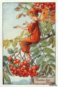 Items similar to Mountain Ash Flower Fairy Vintage Print, Cicely Mary Barker Book Plate Illustration on Etsy Cicely Mary Barker, Flower Fairies Books, Autumn Fairy, Vintage Fairies, Beautiful Fairies, Fantasy Illustration, Fairy Art, Illustrators, Fantasy Art