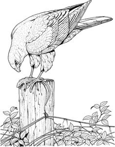 realistic printable drawing pages of hawk in hard bird coloring pages for adults