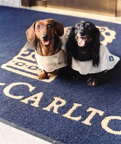 From pet psychics to pet beach cabanas, hotels are pampering pets just as much as their owners. Get the scoop on the over-the-top amenities for pets at these luxury hotels. Pet Psychic, Pet Travel, Travel Tips, Travel Hacks, Dog Friendly Hotels, Smiling Dogs, Pet Beds, Dog Friends, Dog Treats