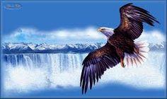 """Résultat de recherche d'images pour """"aigle blanc royal en plein vol"""""""