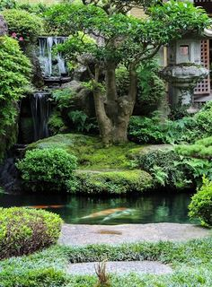 The KOI pond, with very, very large koi fish.(bh)