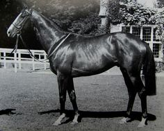 Shergar, thoroughbred racehorse from Ireland, first Epsom Derby Winner. Tragically murdered later on, his body was never found, and the people who shot him to death with a machine gun were never found.