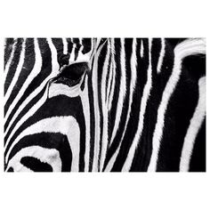 .zebra. #instaanimal #angelafronterafotografia #eyes #eyeliner #stripes #starsandstripes #picoftheday #bw #bwphotography #concept #conceptual #closeup #close #soclose