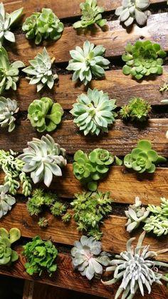 un mur végétal palette qui abrite des plantes succulentes, jardin vertical pour l'intérieur et l'extérieur