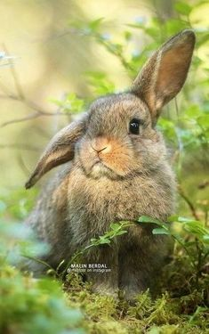 all in Bokeh : Old farm, farm animals, sweet country living Nature Animals, Farm Animals, Animals And Pets, Baby Bunnies, Cute Bunny, Cute Baby Animals, Funny Animals, Animal Original, Lapin Art