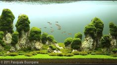 2011 AGA Aquascaping Contest - Entry #90