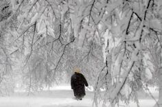 A woman walks on a trail in a park during a blizzard in Alexandria, Virginia, just outside Washington DC, USA, 06 February 2010.  The blizzard is expected to be one of the areas worst in recorded history and bring over two feet of snow, paralyzing transportation in the nations capitol.