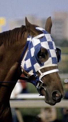 horses running in the kentucky derby 2020