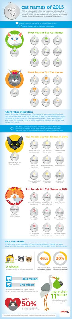 If you're one of the millions of people who added a cat to your family over the past year, selecting a name for your fine feline was something you likely thought long and hard about. Well, the most popular cat names of 2015 have been released and now we know which names many of you chose. Many (in f...