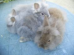 a warren of rabbits Collective Nouns, Rabbits, Lion, Pets, Animals, Leo, Animales, Animaux, Bunnies