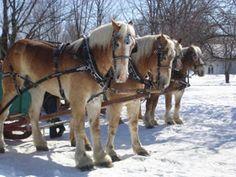 Ottawa Sugarbush - Stanley's Olde Maple Lane Farm™ Sleigh Ride and Maple Syrup Time