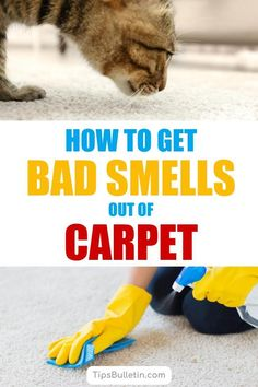 14 Clever Deep Cleaning Tips & Tricks Every Clean Freak Needs To Know Deep Cleaning Tips, House Cleaning Tips, Spring Cleaning, Cleaning Hacks, Cleaning Recipes, Carpet Smell, Homemade Toilet Cleaner, Clean Baking Pans, Cleaning Painted Walls