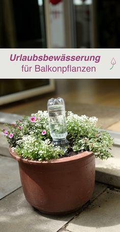 Tipps zur Bewässerung von Balkonpflanzen im Urlaub