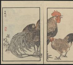 Bairei Kōno (1844-1895). Bairei picture album of one hundred birds (Bairei hyakuchō gafu): [volume 2], 1884. Japanese Illustrated Books. The Metropolitan Museum of Art, New York. The Department of Asian Art. Rogers Fund, 1918 (b17940412) #illustration #rooster