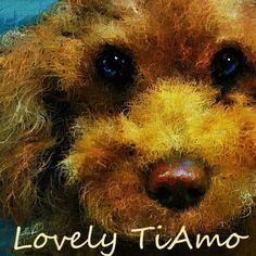 #トイプードル 2日前にこのpickに愛犬ティアモの写真を珍しくアップしました、その写真を元にお絵描きしましたが、普段はお友達の写真を元にしてお絵描きしましたが、その写真の方だけが写真と絵になった作品を比較できませんが、今回は少し前の愛犬ティアモの写真と比較できるようにアップしました。  Be Nice To Me - Rumer http://youtu.be/6RwqPPwHZ_M
