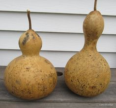 Birdhouse Bottle Gourds at CatbirdCottage ~Homegrown Naturally Dried