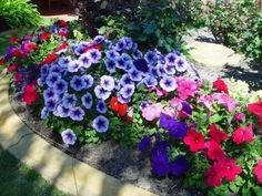 Flower Garden Ideas 2019 (How to Plan for Beginner & Popular Flower for Garden) Flower Bed Edging, Flower Beds, Easy Waves, Blossom Garden, Popular Flowers, Flower Garden Design, Flowers Garden, Outdoor Landscaping, Geraniums