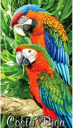"Costa Rica Macaws Beach Towels - Size 30"" x 58""."