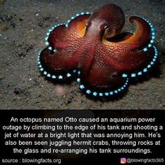 This is my spirit animal. Funny Animal Memes, Cute Funny Animals, Funny Cute, Funny Memes, Hilarious, Animal Humor, Crazy Funny, Octopus Facts, Wtf Fun Facts