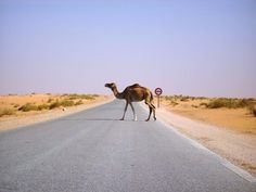 Over-landing West Africa: Mauritania - Landmines and Shea Shells