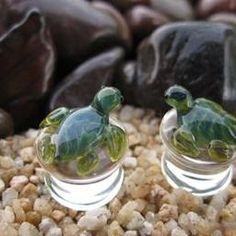 Hey, I found this really awesome Etsy listing at https://www.etsy.com/listing/202325092/glass-turtle-plugs-from-00-g-92-mm-to-58