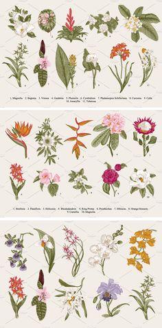 28 Exotic flowers.  by olga.korneeva on @creativemarket