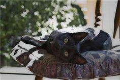 Naming Your Black Cat: Name Ideas for Cats with Black Haircoats Healthy Cat Treats, Pet Treats, Cat Reading, Homemade Dog, Diy Stuffed Animals, Four Legged, Pet Care, Fur Babies, Dog Cat
