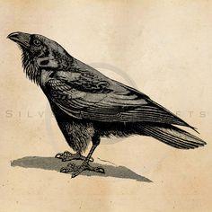 Vintage Raven Crow Illustration Printable by SilverSpiralStudio