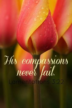 22. It is ofthe LORD'S mercies that we are not consumed, because his compassions fail not. 23. They arenew every morning: greatisthy faithfulness. 24. The LORDismy portion, saith my soul; therefore will I hope in him. 25. The LORDisgood unto them that wait for him, to the soulthatseeketh him. 26. It isgood thata manshould both hope and quietly wait for the salvation of the LORD. Lamentations 3:22-26