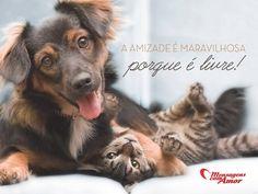 A amizade é maravilhosa porque é livre! #amizade #amigo #maravilhoso #livre