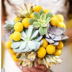Yellow and gray succulents