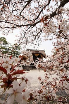 SAKURA in The Kyoto Palace Garden Cherry blossom festival was a wonderful sight to behold.